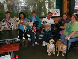 tin shed garden cafe is dog friendly