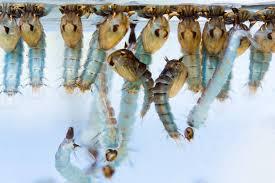 mücken vertreiben diese haus mittel helfen wirklich