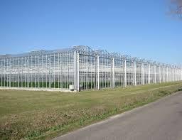 100 Glass House Project AP Holland House Nursery And Service Area