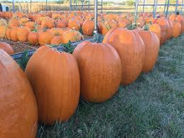 Best Pumpkin Patches Near Milwaukee by Img 1192 Jpg