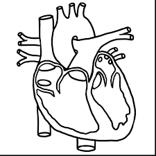 863x863 Human Heart Coloring Page Diagram