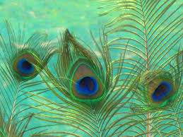 Wallpaper Peacock Feather Hd Wallpapers Images