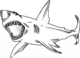 Fancy Great White Shark Coloring Pages 42 In Line Drawings With