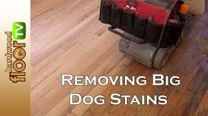 Restain Hardwood Floors Darker by Remove Big Dog Pet Stains In Hardwood Floors Youtube
