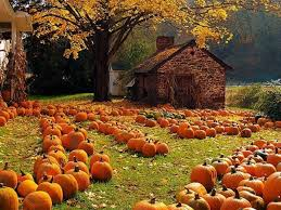 Pumpkin Patches Maryland by 9 Pumpkin Patches Near Minneapolisst Paul