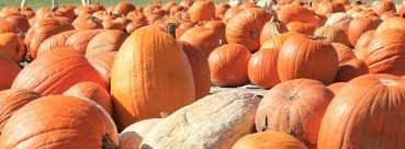 Carmichaels Pumpkin Patch Oklahoma by Heritage Pumpkin Patch Home Facebook
