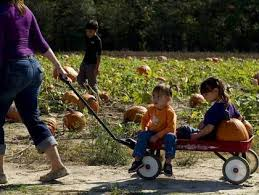 Best Pumpkin Patches In Cincinnati by Best Pumpkin Patches Around Pittsburgh Cbs Pittsburgh