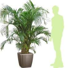 plantes vertes d interieur toutes nos plantes vertes plantes et jardins