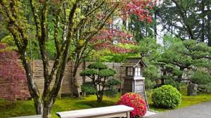 Trees Which Suits Best For Beautiful Backyard Landscape In ... Garden Design With Backyard Landscaping Trees Backyard Fruit Trees In New Orleans Summer Green Thumb Images With Pnic Park Area Woods Table Stock Photo 32 Brilliant Tree Ideas Landscaping Waterfall Pond Stock Photo For The Ipirations Shejunks Backyards Terrific 31 Good Evergreen Splendid Grass Scenic Touch Forest Monochrome Sumrtime Decorating Bird Bath Fountain And Lattice Large And Beautiful Photos To Select Best For