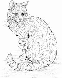 Realistic Cat Coloring Page For Kids Animal Pages Printables Free
