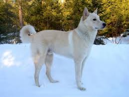 Dogs That Dont Shed Large by The 25 Best Dog Breeds That Dont Shed Ideas On Pinterest