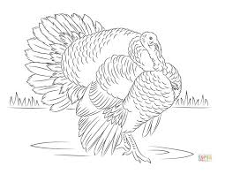 A Wild Turkey In Field