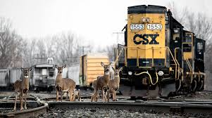 CSX Rail Hub In North Carolina Expected To Create 1,500 Jobs ... When Its A Low Bridge Vs Tall Truck The Never Wins The Csx Train 110 Car Clickety Clack Rhythm Youtube Sb Intermodal Driver Id Horn Echo Ups Trucks Auto 41 Truck Trailer Transport Express Freight Logistic Diesel Mack Csx Railroad Stock Photos Images Alamy Stack Trucking Pinterest Transportation Takes Interim Tag Off Ceo Jim Foote Topics Railpicturesnet Photo Csxt 5443 Transportation Ge