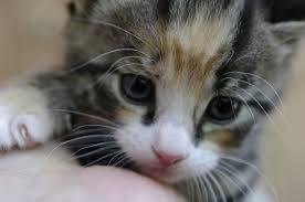 kitty cat cutest kitty cat