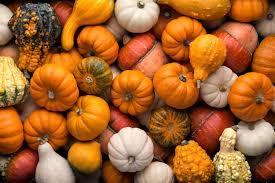 Nearest Pumpkin Patch Shop by 10 Northern Michigan Pumpkin Patches U0026 Corn Mazes Too