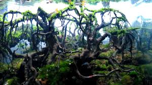 Aquascape Forest - YouTube Aquascape Of The Month June 2015 Himalayan Forest Aquascaping Interesting Driftwood Placement Aquascapes Pinterest About The Greener Side Aquascaping Design Checklist Planted Tank Forum Simons Blog Decoration Bring Nature Inside Home Ideas Downhill By Arie Raditya Aquarium 258232 Aquaria Creating With Earth Water Fire Air Space New Aquascapemarch 13 2016page 14 Page 8 Aquapetzcom Magical Youtube 386 Best Tank Images On Aquascape