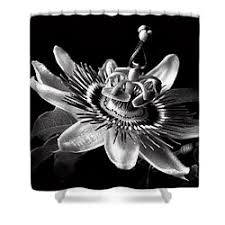 Black And White Flower Shower Curtain by Endre Balogh Shower Curtains For Sale