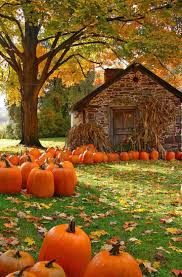 Gainesville Pumpkin Patch by 2663 Best Hallows Images On Pinterest