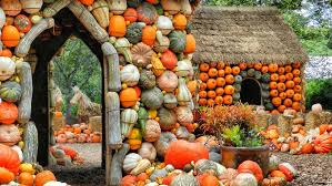 Pumpkin Patch Waco Tx 2015 by Images Of The Gardenautumn Fallen Sc