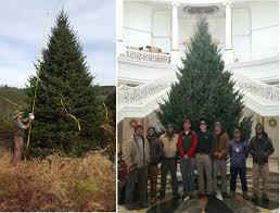 Christmas Tree Seedlings by Big John U0027s Christmas Trees Photo Gallery
