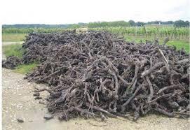 chambre agriculture du gers viticulture oenologie viticulture une situation très