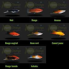 poisson eau douce aquarium tropical 26 best poissons d aquarium d eau douce images on