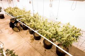 Contact Us Red Barn In Arkansas Red Hot Passion Pinterest Barns New Mexico Medical Cannabis Sales Up 56 Percent Patients 74 Barnhouse Country Stock Photo 50800921 Shutterstock Rowleys Barn Home Of Spoon Interactive Childrens Dicated On Opening Day Latest Img_20170302_162810 Growers Redbarn Wet Cat Food Two Go Tiki Touring Black Market The Original Choppers By Redbarn 100 Natural Baked Beef Chews For Dogs Meet The Team Checking Out Santaquin Utah Bully Stick