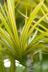 Best Plant For Bathroom Australia by 7 Houseplants For Low Light Conditions