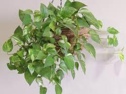 plantes vertes d interieur nom des plantes vertes d intérieur florideeo