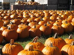 Pumpkin Patch Prince Frederick Md by 18 Can U0027t Miss Fall Festivals In Dc Area Wtop