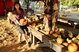 Pattersons Pumpkin Patch Gig Harbor by Sparsely Sage And Timely