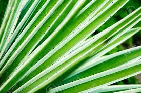 100 Natural Geometry Cactus Aloe Vera Closeup Natural Background The Concept