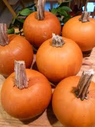 Cinderella Pumpkin Seeds Australia by Zero Waste Pumpkin For Holiday Baking Trash Backwards Blog