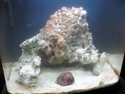 Aquascaping Ideas - General Discussion - Nano-Reef.com Community Aquascape Designs Surripuinet Aquascaping Live Rocks In Your Saltwater Aquarium Columns A Saltwater Tank Callorecom Need Ideas General Rfkeeping Discussion Week 3 Aquascaping 120 Gal Rimless Update Youtube 55g Vertical Tank Ideas Saltwaterfish Forum Aquascape With Rocks Google Search Aquariums Pinterest Bring Back The Wall Rock News Reef Builders Walls For Building Tiger Fish Aquascapinglive Rock Help Tcmas Forums