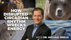 Dr Breus Bed by Lions Wolves And Bears Oh My How Disrupted Circadian Rhythm