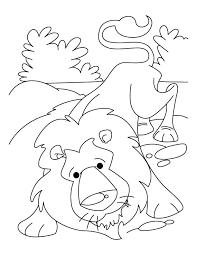 Relaxed Indian Lion Coloring Pages