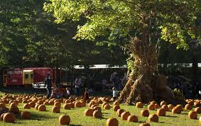 Southern Ohio Pumpkin Patches by The Pumpkin Patch Train Ride In Alabama That U0027s Perfect For A Fall Day