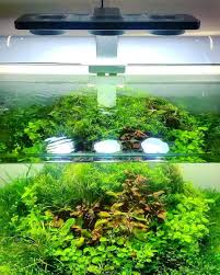 Guide To Aquascaping – Homedesignpicture.win Planted Tank Contest Aquarium Design Aquascape Awards How To Create Your First Aquascaping Love Pin By Marius Steenblock On Pinterest The Month September 2008 Pinheiro Manso Creating Nature Part 1 Inspiration A Beginners Guide To Aquaec Tropical Fish Style The Complete Brief Progressive Art Of 2013 Xl Pt2 Youtube Aquadesign Dutch Sytle Aquascape Best Images On Appartment Iwagumi Der Der Firma Dennerle Ist Da Aqua Nano