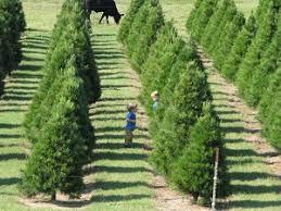 Pumpkin Patch Wetumpka Alabama by Montgomery And Southeast Alabama Christmas Tree Farms Choose And