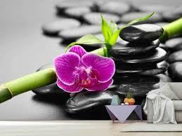 fototapeten orchideen jetzt bestellen