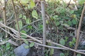 Weave Fence Natural Materials Garden Diy