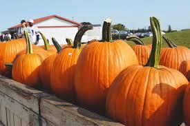 Lehner Pumpkin Farm by Chelsea Mohrman U2013 1812columbus