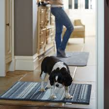 Non Shedding Small Dogs Uk by The Causes Of Rug Allergies And Suitable Rugs The Rug Seller