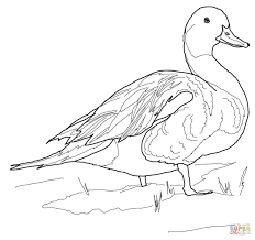 Duck Coloring Page Ducks Pages Free Drawing