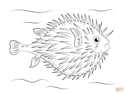 Click The Puffer Fish Coloring Pages