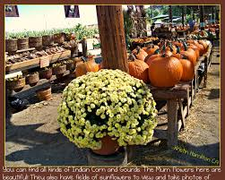 Sacramento Pumpkin Patch With Petting Zoo by The Pumpkin Patch In Yucaipa Is Fun For The Entire Fami
