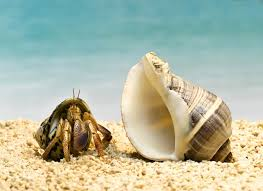 find out if your hermit crab is molting or dead