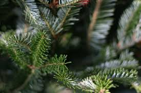 Harrows Artificial Christmas Trees by Where To Buy Christmas Trees In London U2013 How To Get A Christmas
