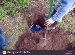 Dig Hole In Garden Stock Photos & Dig Hole In Garden Stock Images ... How To Install Invisible Dog Fence Wire Youtube To Bury A Pet In 6 Simple Steps Digging Create A Sandbox Just For His Digging I Like The Build Sandbox And They Will Come Thepetdoctormbcom New Ny Law Allows People Be Buried With Pets Peoplecom Burial Funerals Malaysia Transparent Pricing Your Trusted Puppy Loves Be Buried In Sand When Pet Is Dying Owners Face Options Deputies Dig Grave Help Woman Dead Dog Two Boys Backyard Burying Bird Stock Photo Getty Images Yard That Himself Alive While Chasing Skunk Line