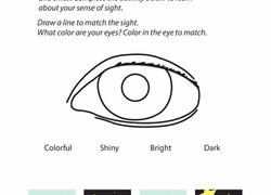 5 Senses Sight Matching
